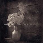 Consolation - Fine Art Flower Photographs by Christopher John Ball - Photographer & Writer