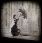 Distressed Rose - Fine Art Flower Photographs by Christopher John Ball - Photographer & Writer