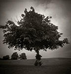 Holga, Diana and Pin Hole Photographs of Trees in London by Christopher John Ball